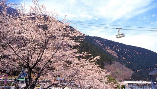 Vừa đi cáp treo vừa ngắm nhìn hoa anh đào bên dưới là một trải nghiệm tuyệt vời khi bạn đến Oita. Cáp treo Kintetsu Beppu chỉ mất 10 phút để đưa bạn lên đỉnh ngọn Mt.Tsurumi nổi tiếng với độ cao 1.375m.