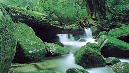Hẻm núi Shiratani Unsuikyo ở Jagoshima thu hút du khách với dòng sông Shiritani trong xanh cùng những tảng đá khổng lồ lồng khít vào nhau. Dọc hai bên bờ sông tràn ngập hoa đỗ quyên Nhật Bản sặc sỡ cùng hàng cây anh đào thơ mộng đã tạo thành bức tranh thiên nhiên hữu tình.