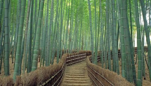 Nằm ở phía bắc Kyoto, rừng tre Sanago là địa điểm bạn không muốn bỏ lỡ trong chuyến đi của mình.