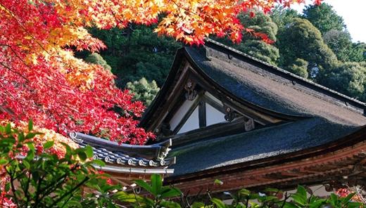 Viếng thăm đền Saimyoji ở Shiga và ngắm những hàng phong đỏ rực là điều mà du khách luôn muốn làm.