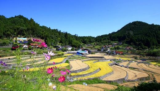 Một bức tranh thiên nhiên tuyệt đẹp được tạo nên từ người nông dân ở Hiroshima bên những thửa ruộng bậc thang của mình.