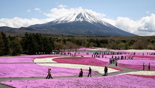 Nhiều du khách đến Nhật với mục đích duy nhất là được đến núi Phú Sĩ.