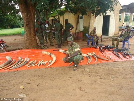 Một chiếc ngà voi có thể đổi được 18.000 viên đạn cho phiến quân LRA.