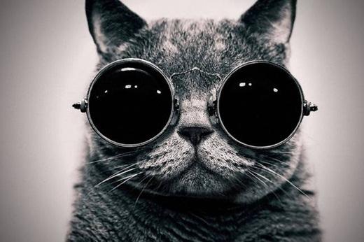 Cơ quan tình báo trung ương Mỹ dã từng huấn luyện những chú mèo thành gián điệp để nghe trộm điện thoại của Nga.