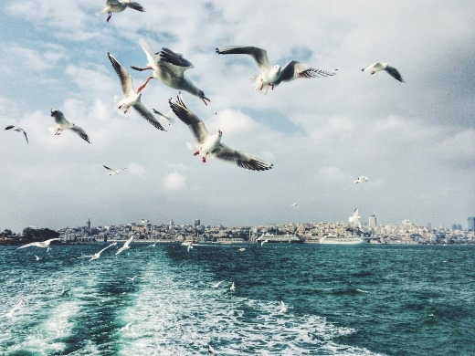 Tấm ảnh với màu sắc rất hài hòa đã bắt được khoảnh khắc đàn chim tung cánh trên mặt biển
