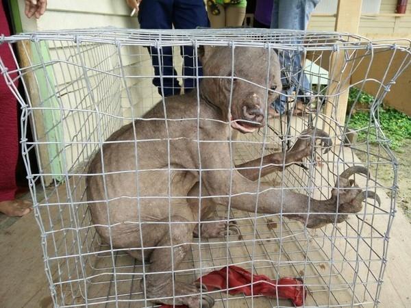 Con gấu chó hiện đang được chăm sóc y tế để sớm hồi phục