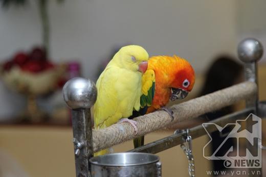 2 chú vẹt mà Khánh Thy đang chăm sóc cũng được cô mang đến phòng tập. Cô dành khá nhiều tình cảm cho 2 chú chim này, thậm chí Khánh Thy còn âu yếm gọi chúng là 'con' và tự nhận mình là 'mẹ'. - Tin sao Viet - Tin tuc sao Viet - Scandal sao Viet - Tin tuc cua Sao - Tin cua Sao