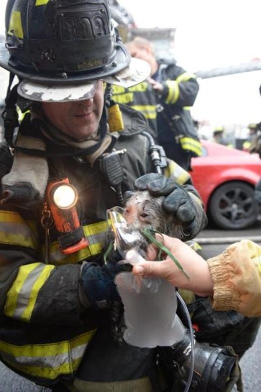 Chú chó Mickey đã được cứu thoát khỏi đám cháy.