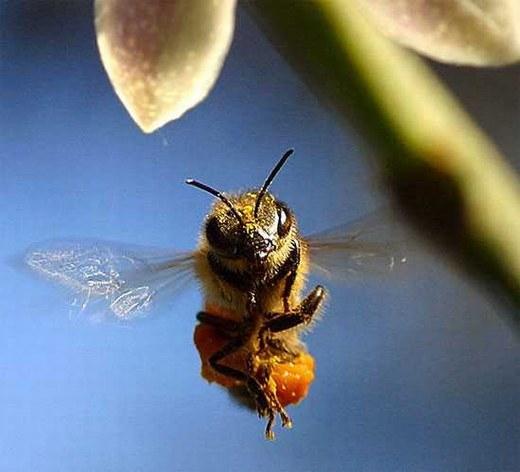 Loài ong rất nhạy cảm với mưa bão. Chúng thường tìm nơi trú ẩn trước hàng giờ khi cơn mưa ập đến.