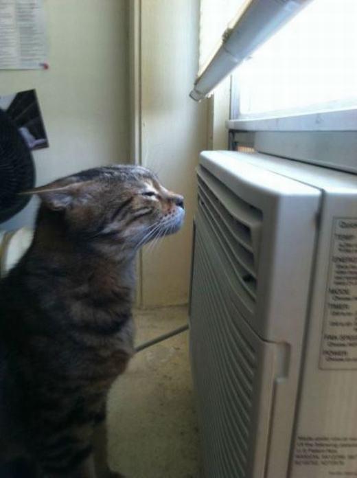 Nóng quá, ngồi trước quạt cho nó mát!