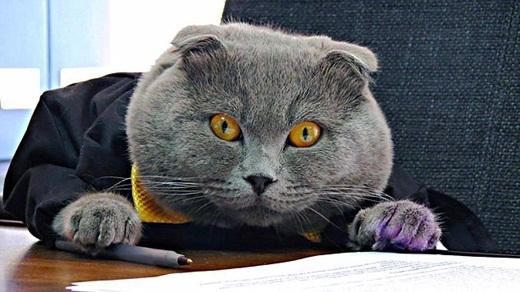 Đôi mắt cam sắc lẹm của giám đốc sẵn sàng cảnh cáo những nhân viên làm việc không chăm chỉ