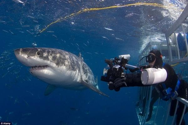 Với những dòng chảy ấm và sạch quanh năm, hòn đảo này là một trong địa điểm lý tưởng nhất thế giới để lặn sâu và… ngắm cá mập trắng. Hơn nữa, nơi đây còn là nơi sinh sống của hải cẩu – món ăn ưa thích của cá mập trắng.