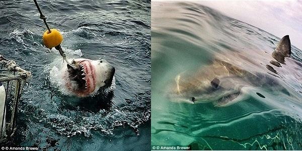 Ải dám đến gần và cho những chú cá mập này ăn nào?