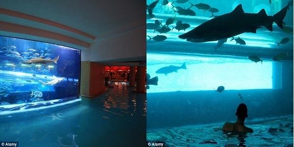 Nếu bạn muốn bơi cùng cá mập nhưng không muốn bị cản trở bởi những chiếc lồng lặn thì hãy đến khách sạn Golden Nugget ở Las Vegas.