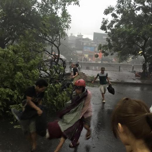 Một người đi đường bị cây xanh đè ngã