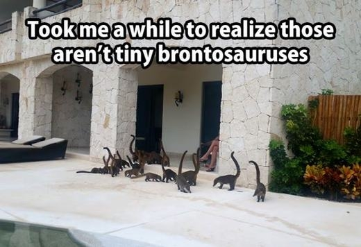 """""""Nhà mình có nuôi một số thú cưng. Các bạn đừng nhìn nhầm, chúng không phải khủng long đâu!"""""""