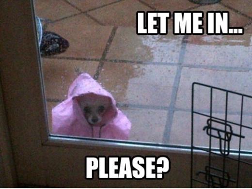 Sao bảo muốn tắm mưa mà chưa gì đã đòi vào rồi?!