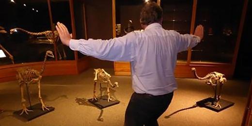 Người đàn ông này lại huấn luyện... 3 bộ xương khủng long.