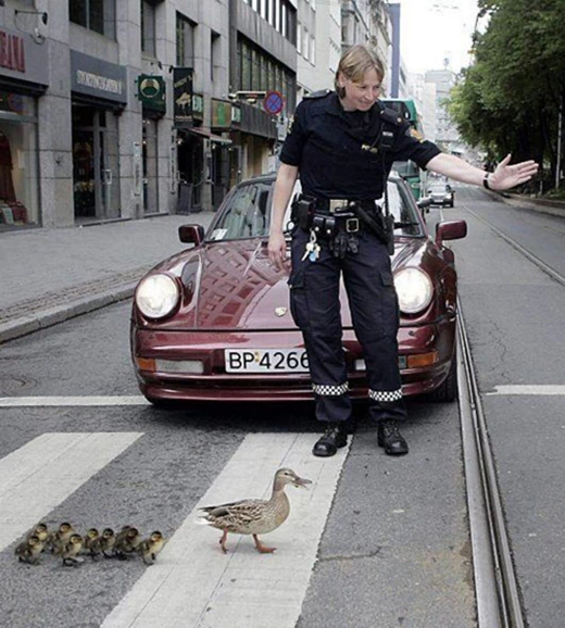 Một nhân viên cảnh sát đang ân cần chặn xe cho mẹ con nhà vịt được an toàn và thong thả sang đường.