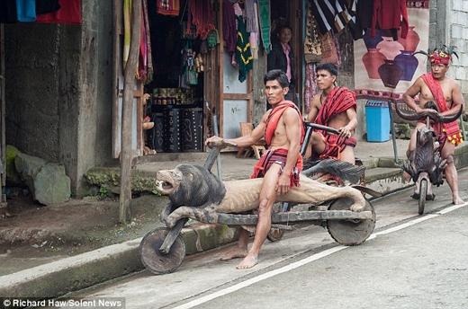 Ở vùng Banaue, nơi cư trú của người Ifugao địa hình chủ yếu là đồi dốc. Vì lý do đó, người dân ở đây đã phát minh ra những chiếc xe gỗ giúp cho việc di chuyển của mình nhanh và tiện lợi hơn.