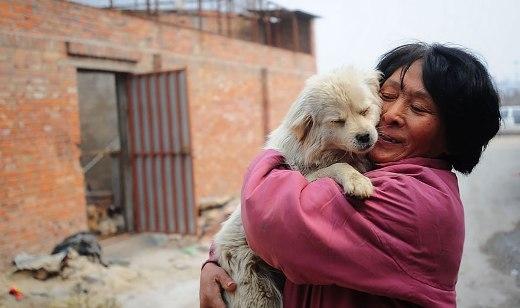 Bà Yang đã tự mình mở ra một căn nhà chung cưu mang hơn 1000 chú chó có nguy cơ bị bắt và giết hại ở Trung Quốc.