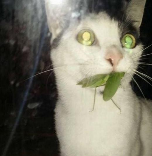 Chú mèo bị biến thành ác quỷ chăng?