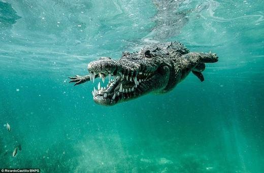 """""""Nguy hiểm luôn hiện hữu, nhưng nếu bạn có kinh nghiệm, bạn sẽ biết được lúc nào nên lại gần, lúc nào nên tránh xa những con quái vật như cá sấu hay cá mập"""", ông nói thêm."""