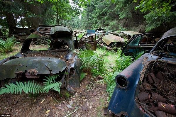 Những chiếc xe cổ điển rỉ sét từ những năm 60 này bị bỏ lại một bãi phế liệu trong rừng ở Chatillon, Bỉ và đến nay vẫn còn tồn tại. Nơi đây vô tình trở thành nơi trú ngụ lý tưởng cho các loài côn trùng trong rừng.