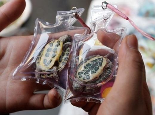 Hai chú rùa nhỏ đã chết sau khi cạn nước và o-xy trong túi.