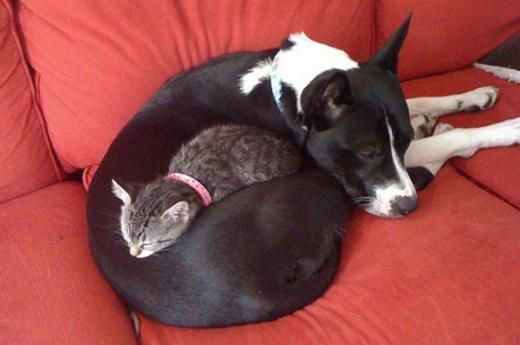 """""""Sau màn rượt đuổi một hồi lâu là ôm nhau nằm ngủ thế này đây"""""""
