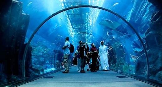 Đường hầm cá mập bên trong khu trung tâm mua sắm lớn nhất Dubai.