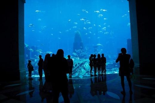 Khu hải dương học cực kỳ hoành tráng như đại dương thu nhỏ