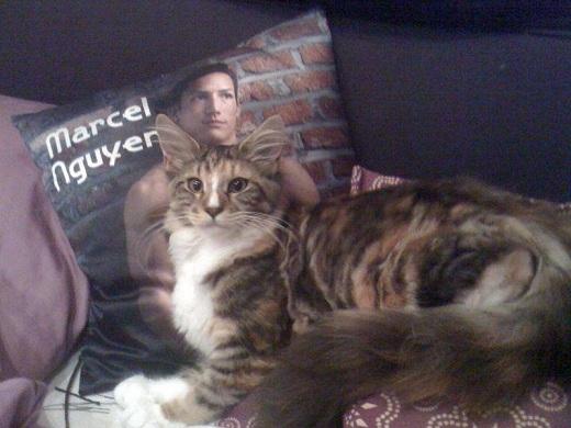 Marcel còn là một người yêu động vật và khá hài hước. Anh chàng đã đăng tải bức ảnh chú mèo của mình lên fanpage kèm với dòng caption: 'Đây chắc chắn là fan trung thành nhất của mình rồi'.