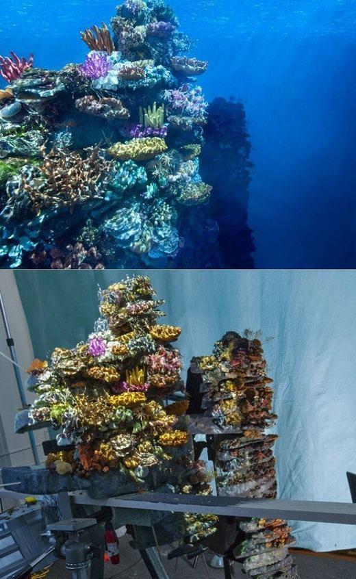Những rặng san hô dưới đáy đại dương thực chất chỉ là một mô hình thu nhỏ.