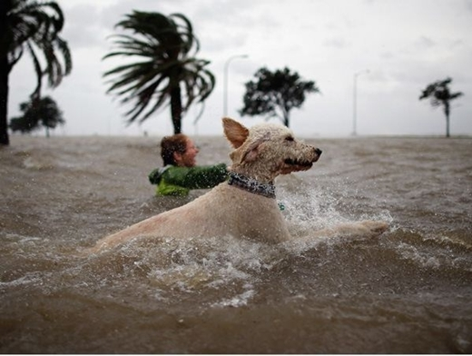 Khoảng cách xa gần làm chú chó này tưởng chừng như sắp được thay thế ngôi vị khổng lồ của Cá Ông vậy.