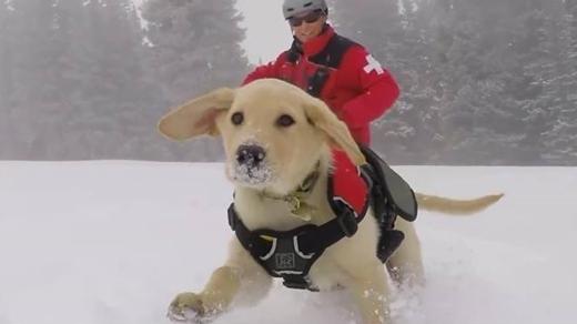 """Trông anh chàng cứ như đang cưỡi chó """"khủng"""" giữa bão tuyết!"""
