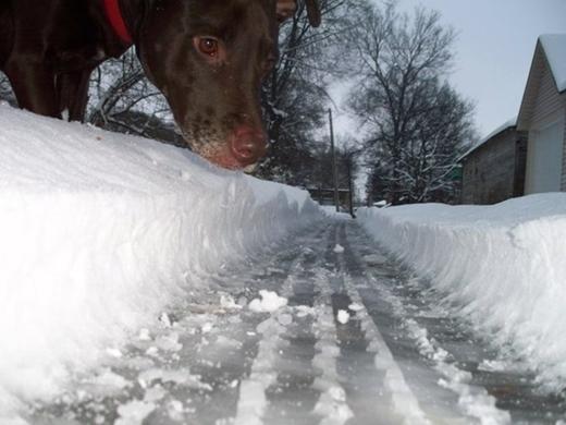 Có lẽ nào hành trình của chú chó này đã làm... lở đất, long trời?