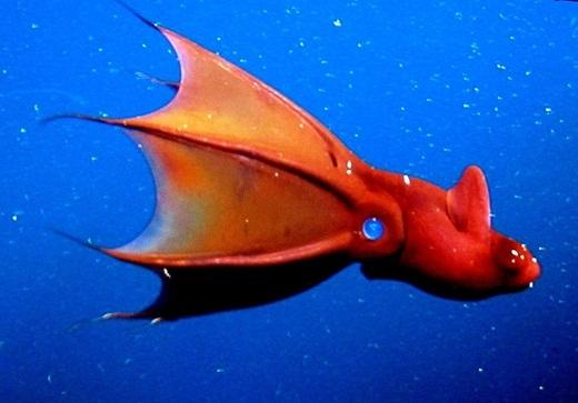Mực ma cà rồng là một loại sinh vật kì quái sống ở dưới biển sâu có thể tự phát ra ánh sáng thông qua các xúc tu. Khi bị quấy rầy, chúng sẽ phun ra một loại mực có thể phát sáng trong bóng tối. Chúng xác định phương hướng bằng đôi mắt cân xứng và cực kì to ở hai bên.