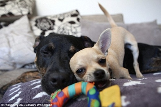 Tình bạn ngọt ngào của hai chú chó