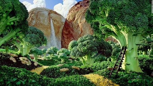 Những cây bông cải xanh nhỏ bé nay đã trở thành một rừng cây đại thụ uy nghiêm dưới bàn tay của Carl Warner.