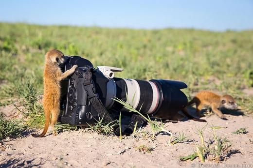 """""""Đúng rồi đấy, đi thật tự nhiên vào, chị đang chụp ảnh cưng đây này!""""."""