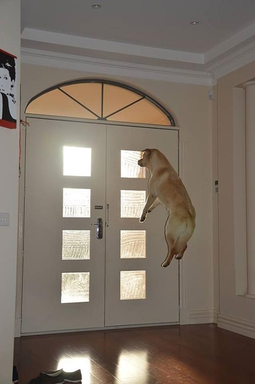 Khi không có chủ ở nhà thì những chú chó mới phô diễn 'siêu năng lực' của mình.
