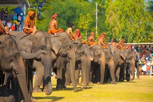 Đây là một lễ hội rất nổi tiếng và cũng là một trong những nền văn hóa đặc sắc của Thái Lan được diễn ra trong tháng 11. Lễ hội này được tổ chức nhằm tôn vinh voi và người huấn luyện - bạn đồng hành của chúng.