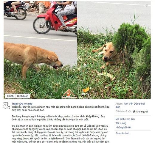 Câu chuyện về chú chó tội nghiệp được chia sẻ trên trang Trạm cứu hộ mèo. (ảnh: Trạm cứu hộ mèo)