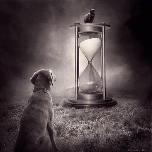 Có lẽ… thời gian sẽ xóa đi khoảng cách chó mèo chăng?