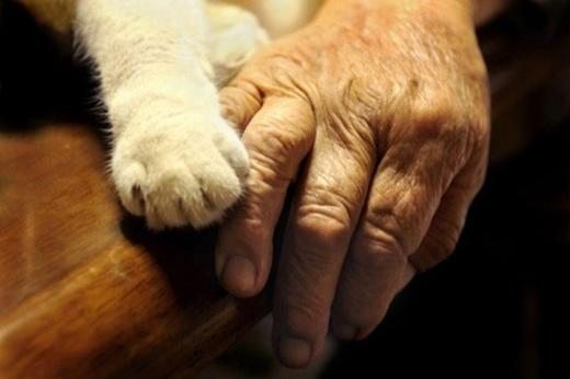 Một tình bạn giữa người và động vật vô cùng thân thương, cảm động đúng không nhỉ?