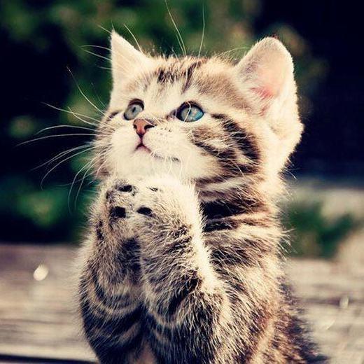 Mèo không thể nếm được những thứ có vị ngọt bởi chúng thiếu gen cảm nhận vị đó.