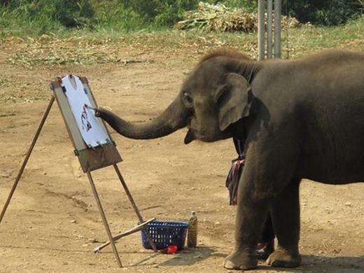 Vòi của một con voi không hề có đoạn xương nào cả mà thay vào đó là 40.000 cơ khác nhau.