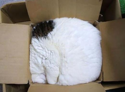 Dịch vụ đóng gói mèo, tiết kiệm chi phí vận chuyển vật nuôi khi đi máy bay.