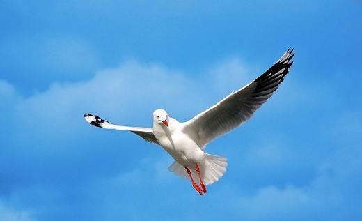 Hải âu lớn là loài chim có thể ngủ trong khi đang bay.